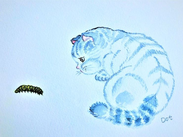 A crouching blue cat is closely examining a centipede
